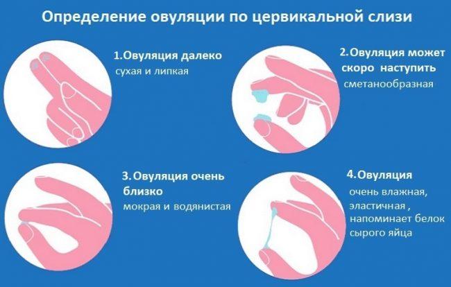 Определение овуляции по цервикальной слизи