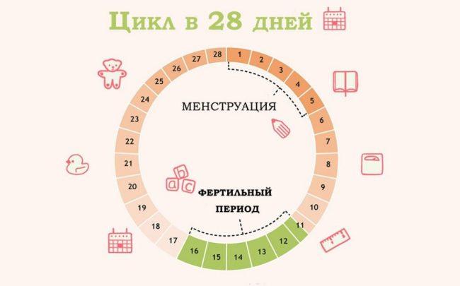 Менструальный цикл 28 дней