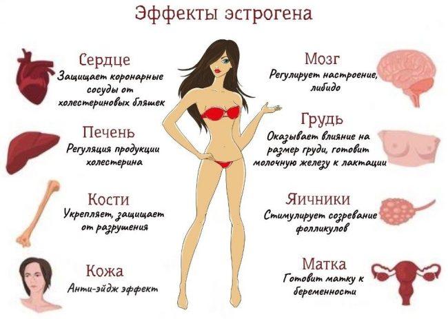Эффекты эстрогена