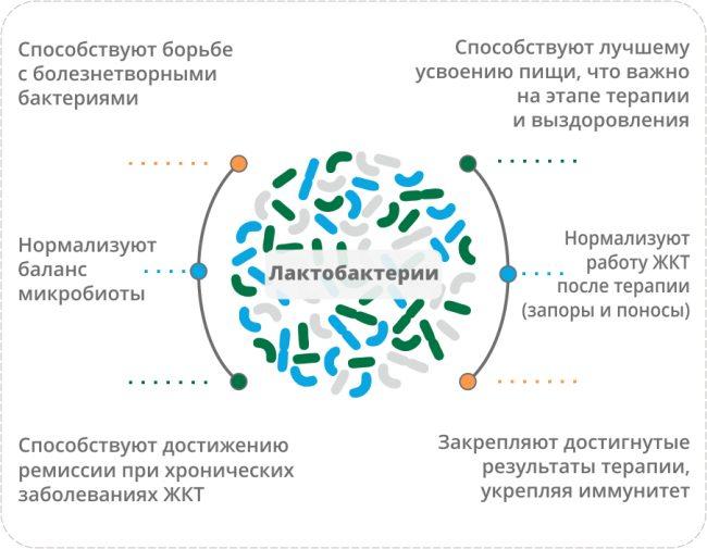 Польза лактобактерий