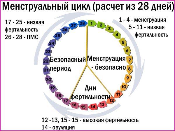 Менструальный цикл на схеме