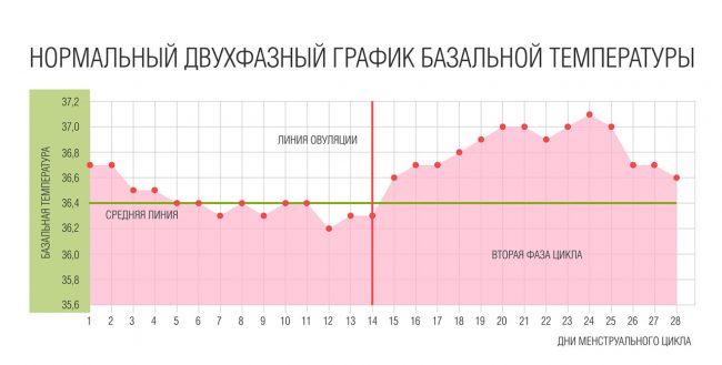 График измерения базальной температуры