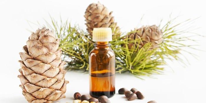Кедровое масло в бутылочке, шишки и орешки