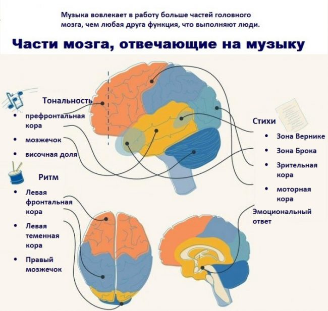 Части мозга, отвечающие на музыку