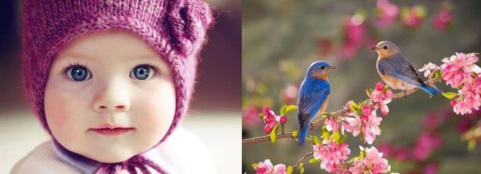 Маленькая девочка и птицы на ветке