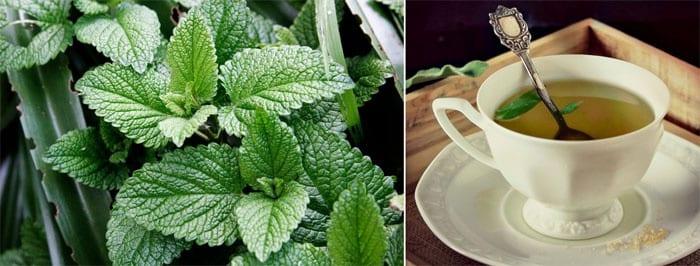 Мята и чай с мятой