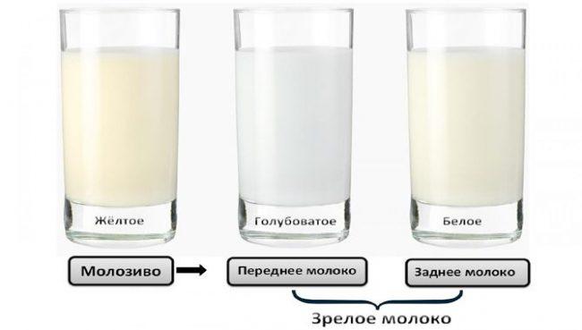 Виды секрета молочных желез