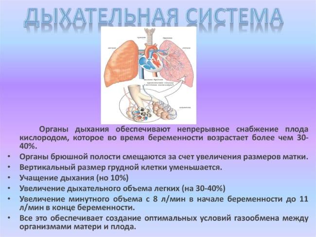 Особенности дыхательной системы при беременности