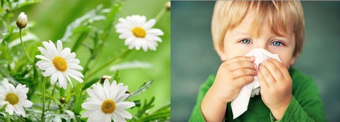 Ромашки и ребенок с носовым платком