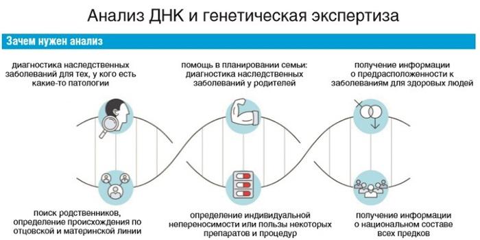 Зачем нужен анализ ДНК