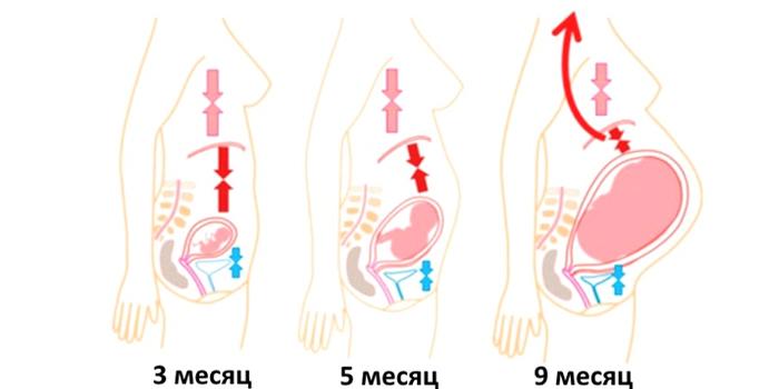 Давление плода на органы