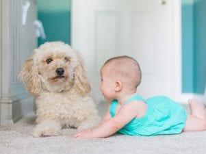 11 лучших породы собак для детей