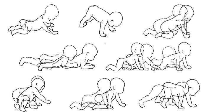 Этапы ползанья у грудничка