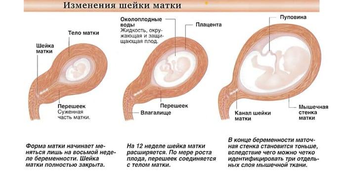 Изменения во время беременности