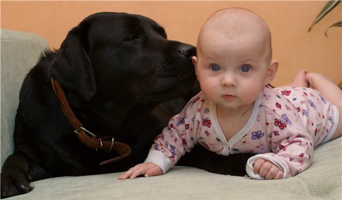 Черный лабрадор и малыш