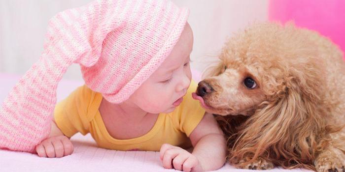 Малыш и пудель