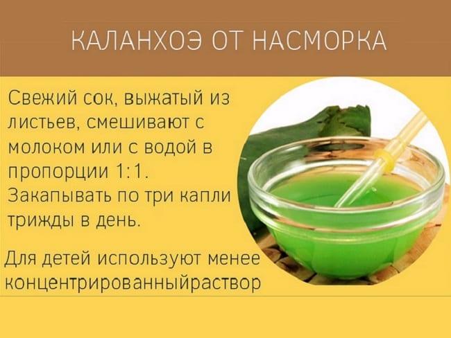Рецепт от насморка с каланхоэ