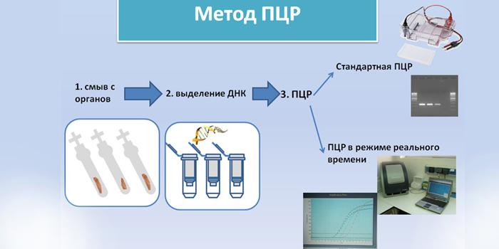 Метод ПЦР-диагностики