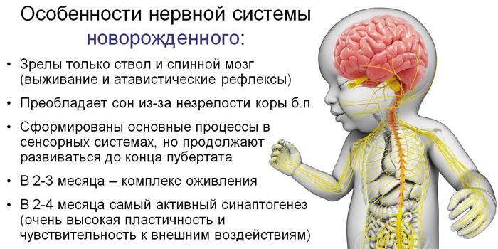 Особенности нервной системы новорожденного