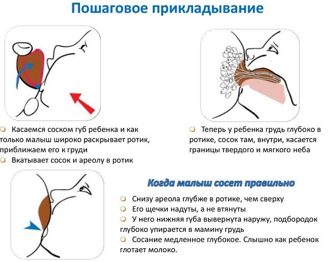Пошаговое прикладывание к груди