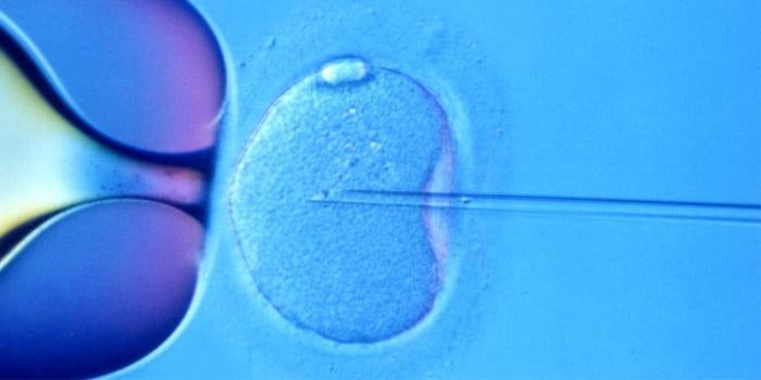 Процесс оплодотворения под микроскопом