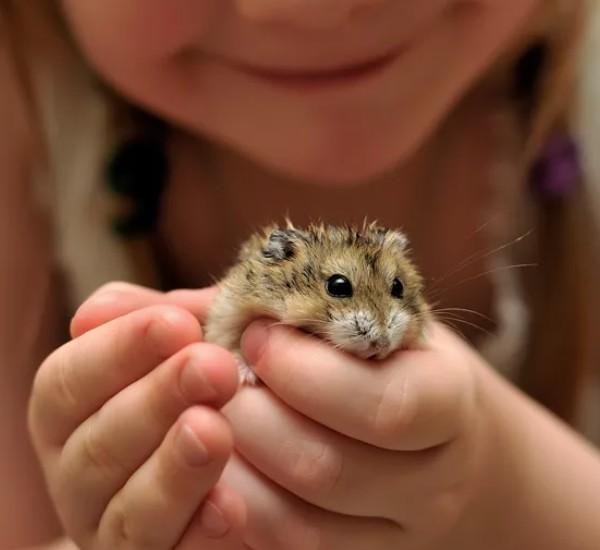 7 лучших домашних животных для детей