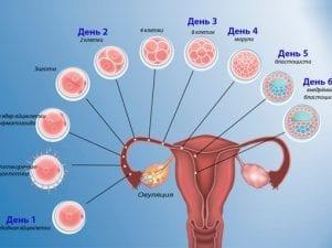 Поздняя имплантация эмбриона — причины и последствия