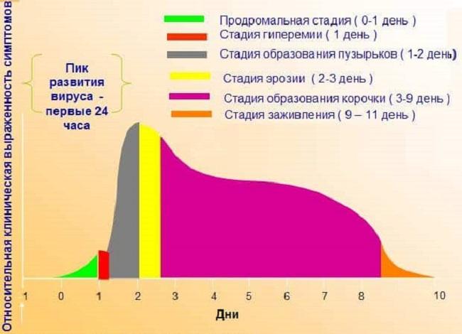 Стадии развития инфекции