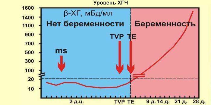 График уровня ХГЧ до и после наступления беременности