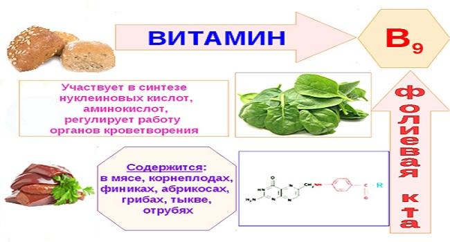 Функции витамина В9