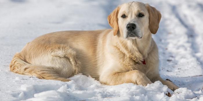 Собака на снегу